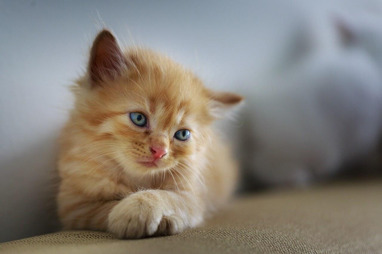Kissat ovat tervetulleita mökille.