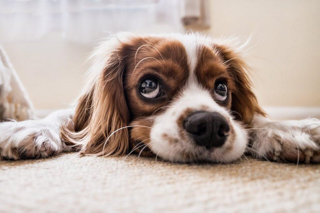 Koira vuokramökille mukaan