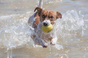 Koiran voi ottaa Pyhtään virkistysalueen rannalle mukaan